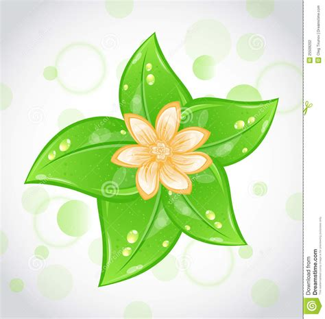 cute eco background  green leaves  flower stock