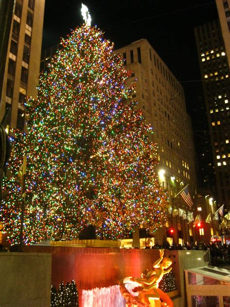 wallpaper rockefeller center tree 2 17 in new york city part 2 extraordinary trees and other finds ritournelle