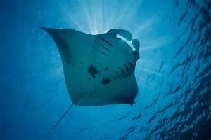 Maldives Underwater World