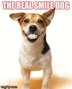 Smile Dog Meme - dog smiling meme