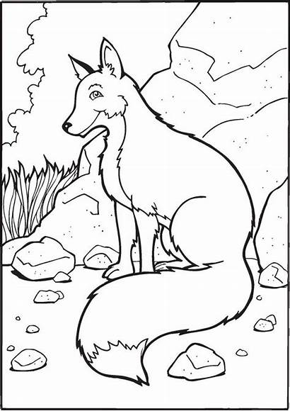 Coloring Pages Printable Animals Animal Fox Wild
