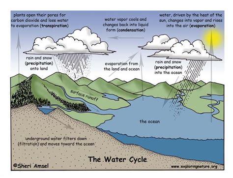 sunnyland  grade  water cycle