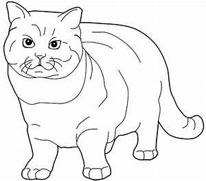 Ausmalbilder Katze Ausmalvorlagen Und Druckbare Malbilder