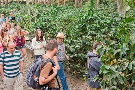 Since then, café britt has helped pioneer the costa rican coffee. Book your tickets online for Britt Coffee Tour, Heredia: See 440 reviews, articles, and 249 ...