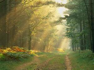 Nature, Sun, Rays, In, The, Forest, Germany, Picture, Nr, 47197