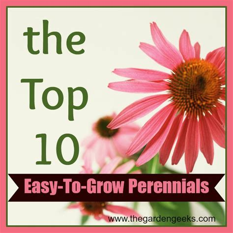 easy to grow perennials easy to grow perennials thegardengeeks garden variety pinterest