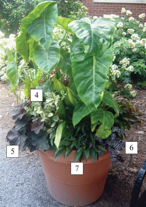 7 Best North Texas Container Gardening Ideas Images On