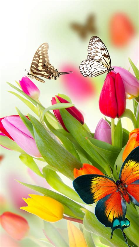 wallpaper butterfly flowers tulips  nature