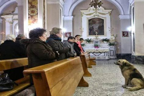 italy dog frequent churchgoer  owner died petmd