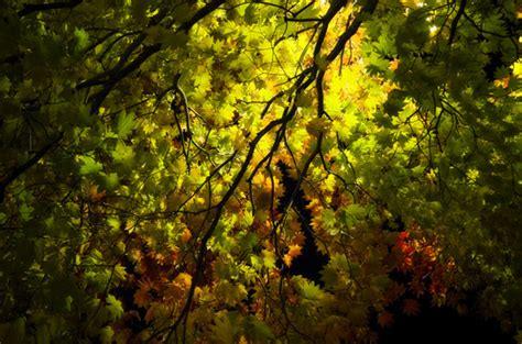dark night tree background  stock