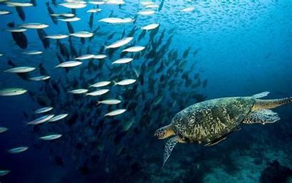 Marine Wallpapers Underwater Ocean Sea Background Animals