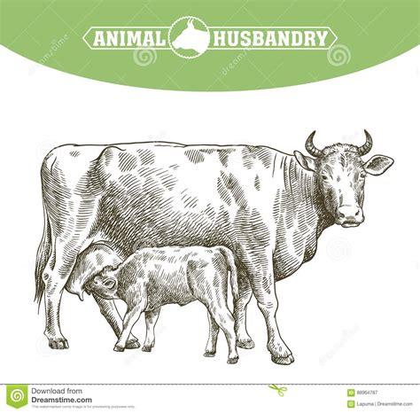 ruminant cartoons illustrations vector stock images