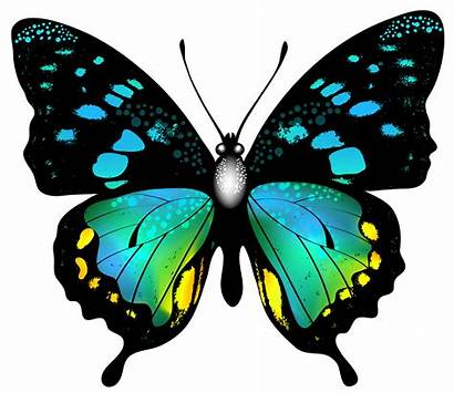 Colorful Butterfly Clip Clipart Butterflies Transparent Yopriceville