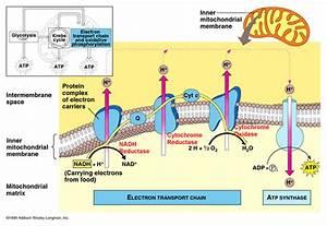 Ch24 Phosphorylation
