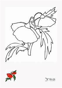 Aufbau Einer Blume : aufbau einer vogelfeder birds in 505days ~ Whattoseeinmadrid.com Haus und Dekorationen