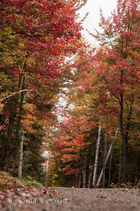 Fall Gallery Maine  New England Fall Foliage