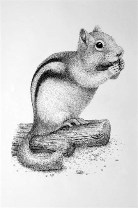simple  easy pencil drawings  animals