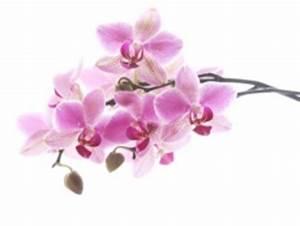 Orchideen Klebrige Blätter : senn blumen ag pflegetipps ~ Whattoseeinmadrid.com Haus und Dekorationen