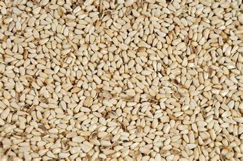 safflower seed vvrs australia