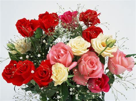 gambar bunga mawar bergerak gratis girlfriend
