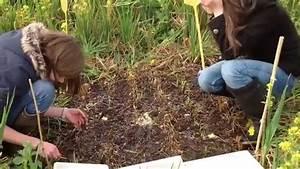 Vers De Terre Acheter : comptage de vers de terre youtube ~ Nature-et-papiers.com Idées de Décoration