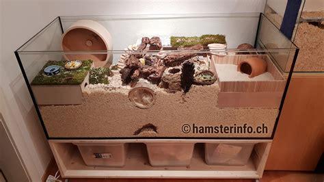 hamstergehege hamsterinfoch