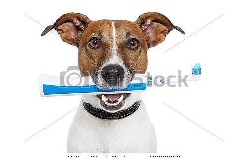 baixar de escova de dentes de cão dragao