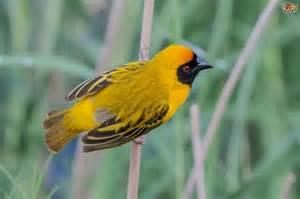 Most Intelligent Bird Species
