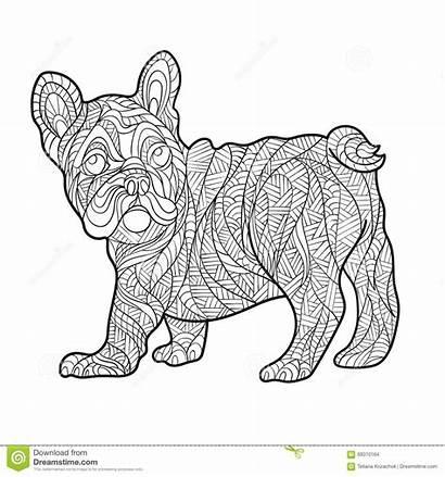Bulldog French Vector Drawn Coloring Illustration Zentagle