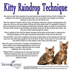 essential oils cats 1000 images about young living raindrop on pinterest raindrop technique young living