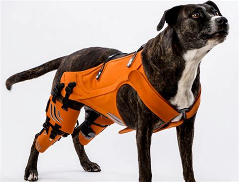 hipster harness  put  hip hop    dog