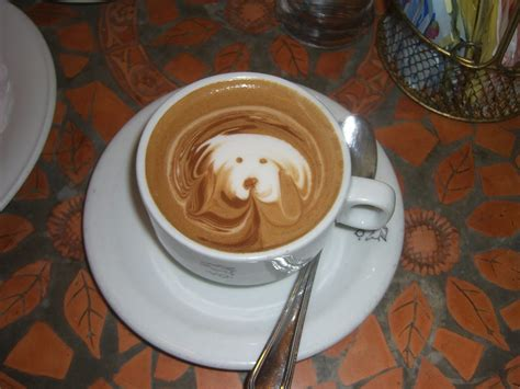 Dogs, Cats and Coffee: Are They Safe Together?   Bipartisan Cafe