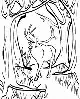 Elk Coloring Printable Deer Male Nimbus Lost Sheets Colornimbus Sheet Animals sketch template