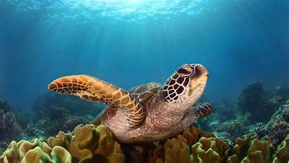 Turtle Wallpapers 1080p Laptop 4k Backgrounds Resolution