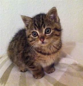 Was Brauchen Katzen : katzen verein tiere brauchen freunde e v ~ Lizthompson.info Haus und Dekorationen