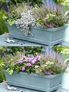 Herbstblumen Für Kübel : zwei varianten balkonkasten herbstlich bepflanzen kompozycje w donicach pinterest balkon ~ Buech-reservation.com Haus und Dekorationen