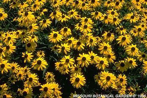 border plants for sun top 28 perennial border plants for sun edging design ideas delicious ground cover or edging