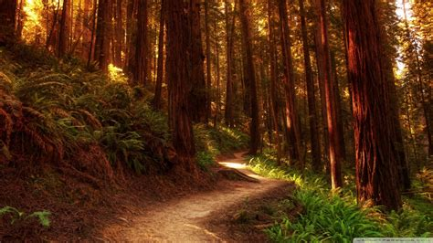Redwoods Backgrounds And Wallpapers