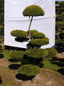 eibe kaufen eibe taxus baccata g nstig aus der baumschule With feuerstelle garten mit bonsai eibe