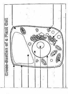 Cross-section Of A Plant Cell Lesson Plan For 7th
