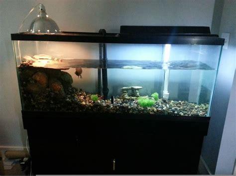 aquatic turtle basking light the 25 best turtle tank filters ideas on pinterest