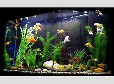 Types of Freshwater Aquariums The Aquarium Setup