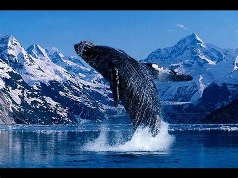 Our Incredible Beautiful World Amazing Nature Footage