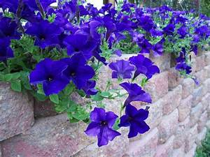 Flowers for a Color-themed Garden - PaperToStone
