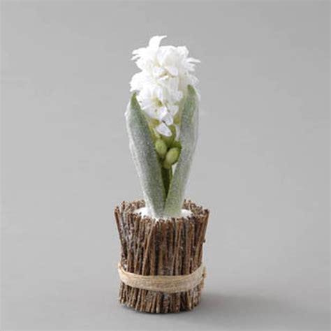 planter des jacinthes en pot comment conserver et quand replanter les jacynthes offertes pour no 235 l r 233 solu