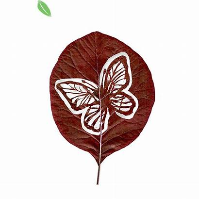 Ecard Moments Butterfly Leaf