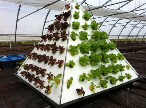 Pyramid #gardening #organic #veggies #hydroponic