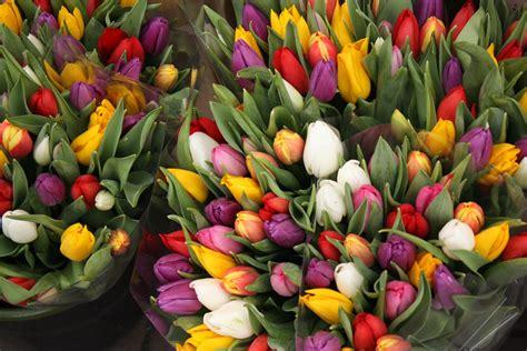 piantare tulipani in vaso tulipani immagini bulbi caratteristiche dei tulipani