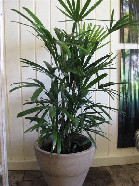 Large Floor House Plants