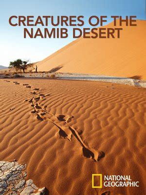 Creatures of the Namib Desert by National Geographic ...